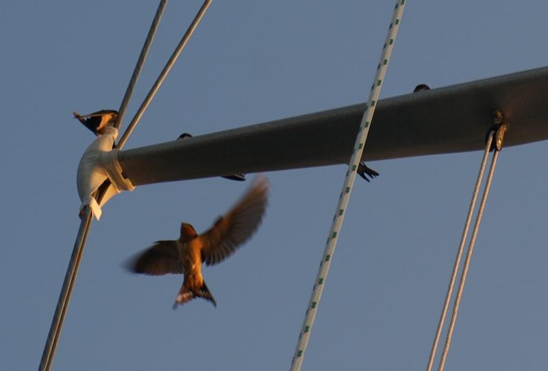 Birds on my spreaders