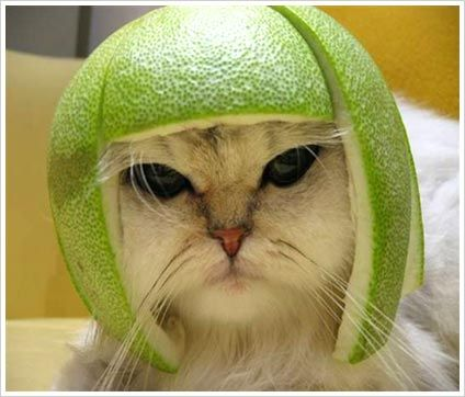 Cat wearing a lime