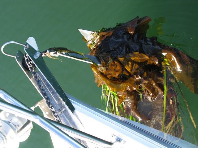 Fouled anchor