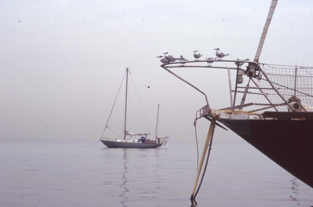 CVD anchorage
