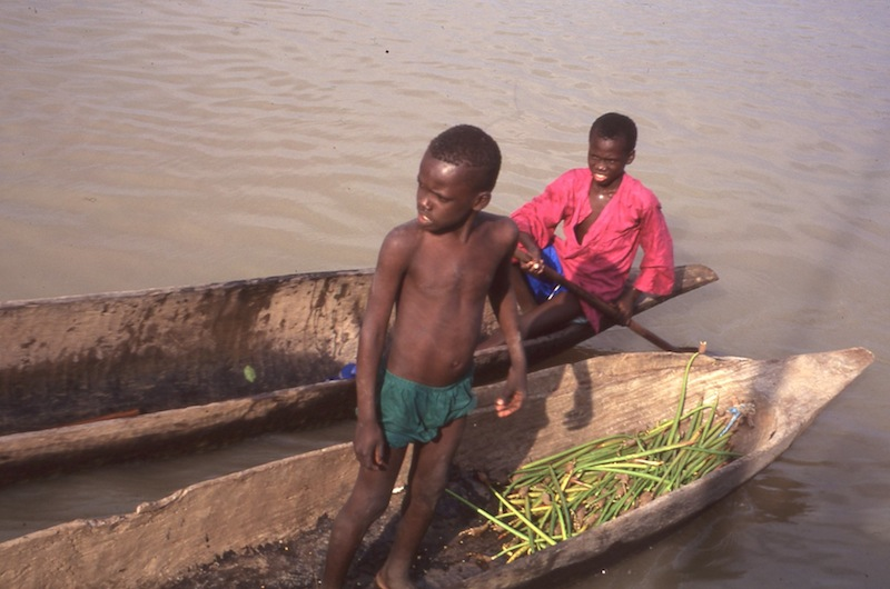 Boys in pirogues, Gambia River