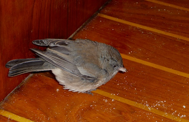 Bird aboard