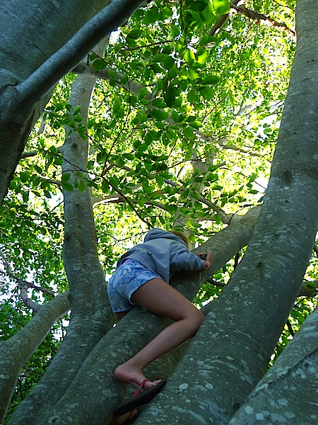 Lucy up tree