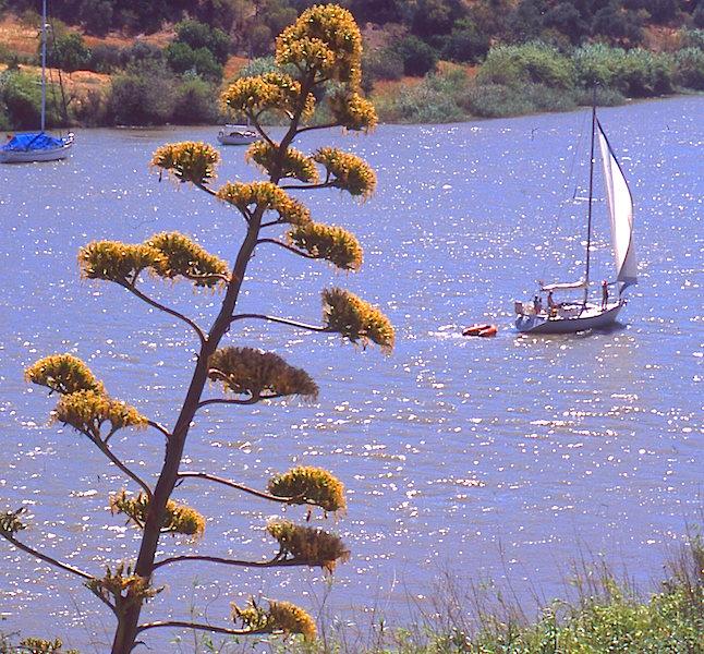 Sailing the Guadiana