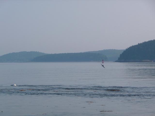 Tide line