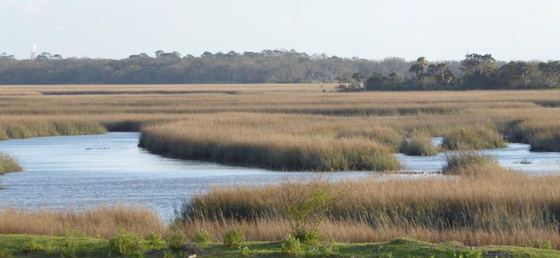 Georgia marshes