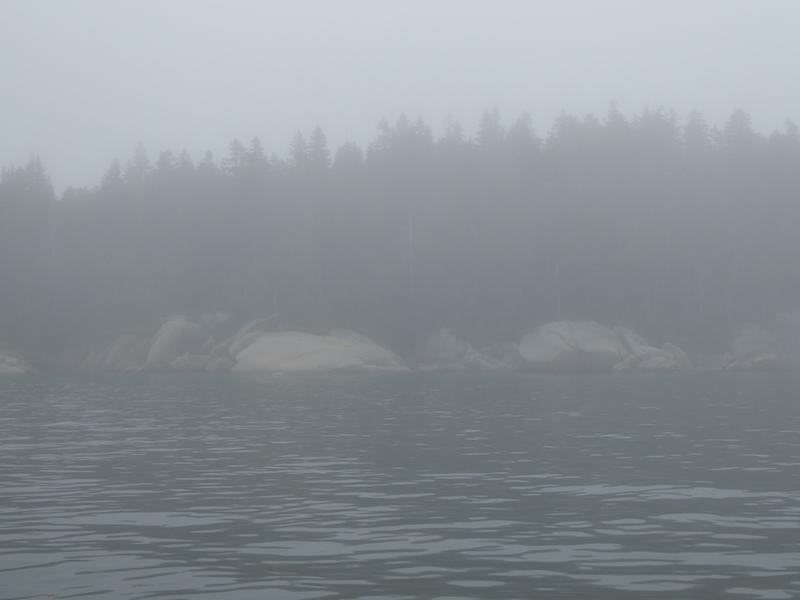 Seal Bay fog